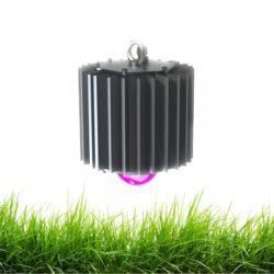 svetodiodniy-svetilnik-dlya-rasteniy-profi-50w-fito-600x600